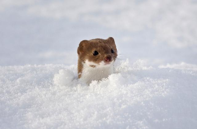 Редкие виды животных из Красной книги России
