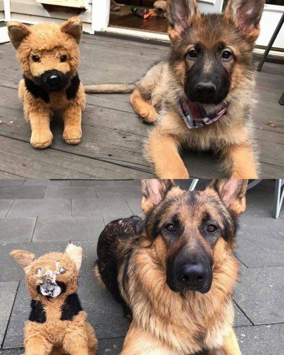 Эти снимки доказывают, что домашним животным нужны свои игрушки