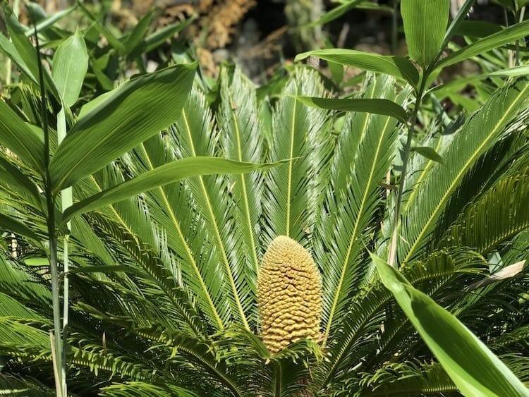 Глобальное потепление возвращает доисторические растения к жизни