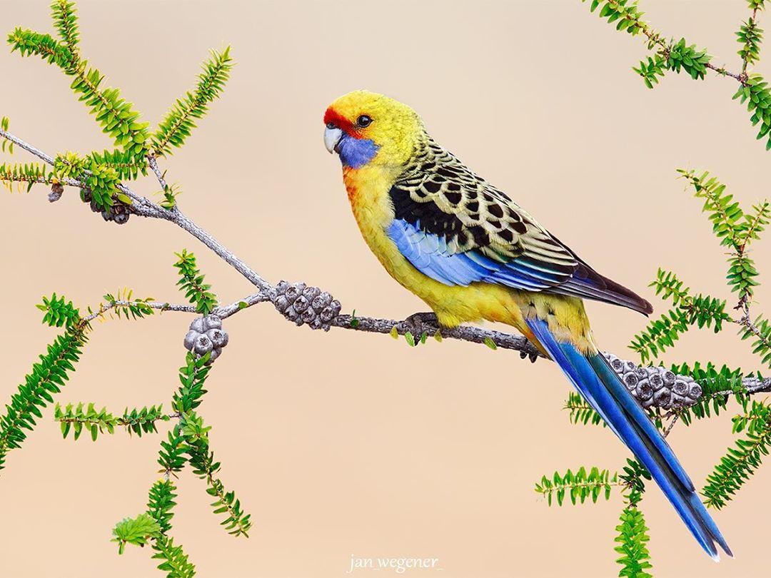 Красота разных птиц на снимках Яна Вегенера