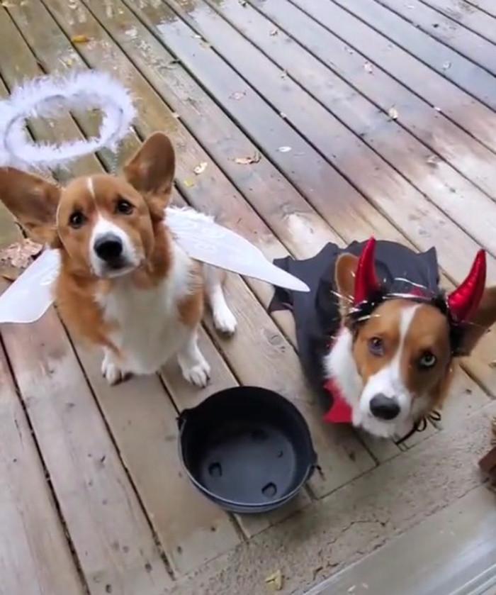 Креативные и симпатичные хэллоуинские костюмы для животных