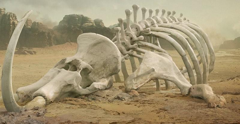 Массовые вымирания видов в истории Земли