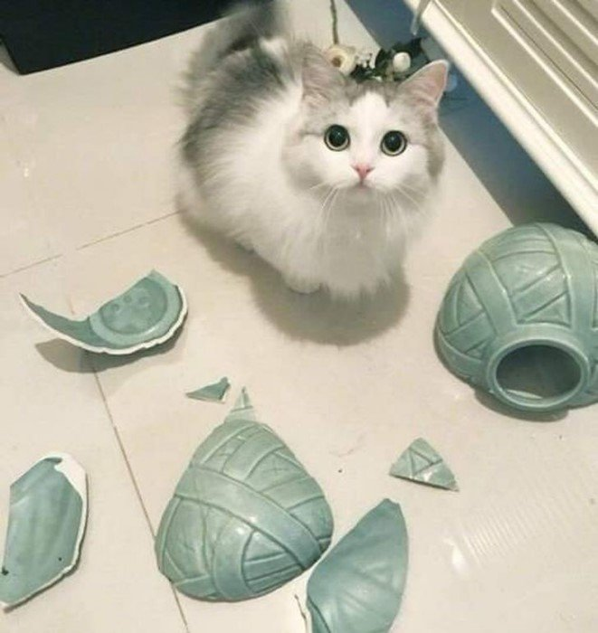Котики, которые точно знают, кто хозяин в доме