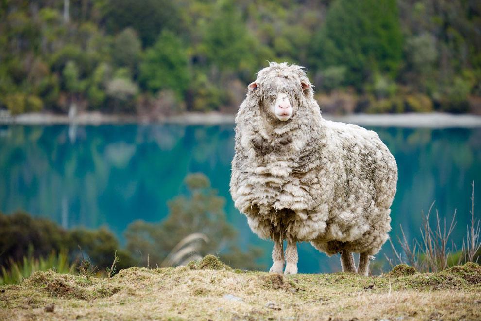 Путешествие по Новой Зеландии на снимках