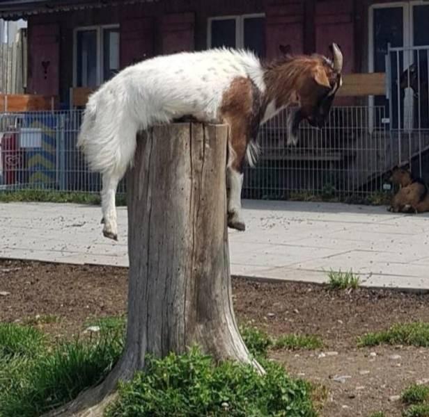 Домашние животные, которые попали в неловкое положение