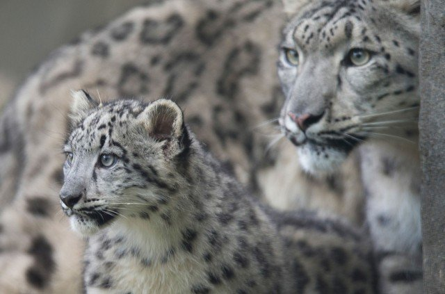 Мамы с детёнышами из животного мира