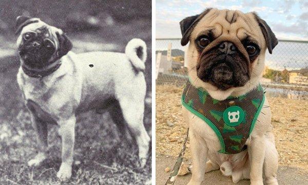 Популярные породы собак 100 лет назад на снимках