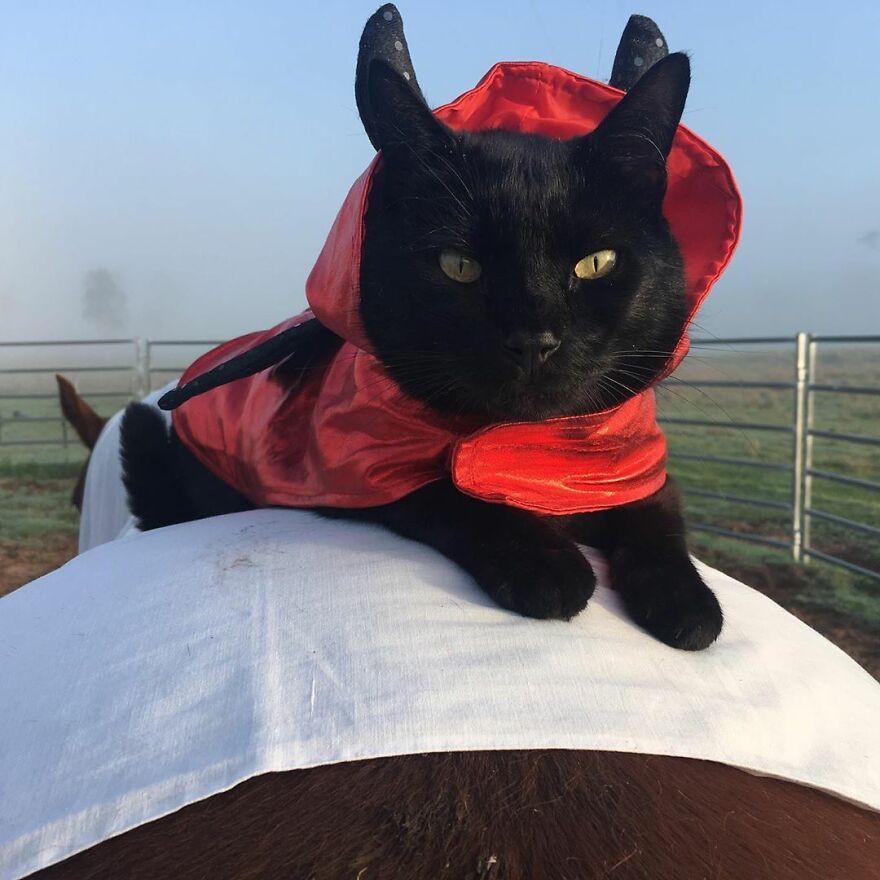 Кошка и лошадь которые уже 7 лет являются лучшими друзьями