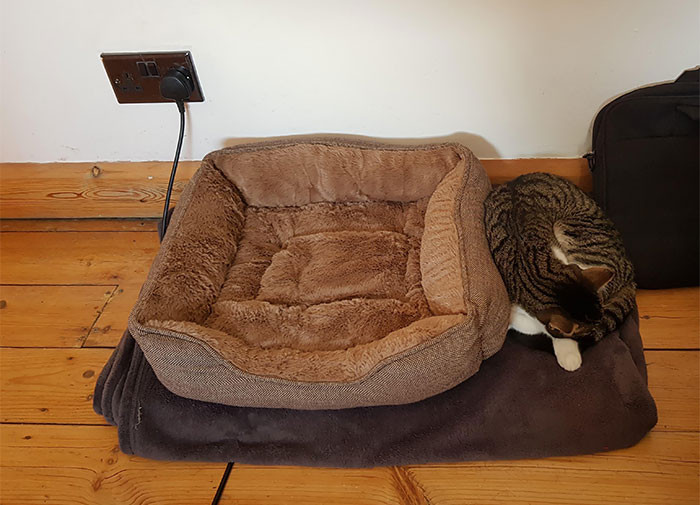 Любимые места котиков это не домики, лежаки или кроватки