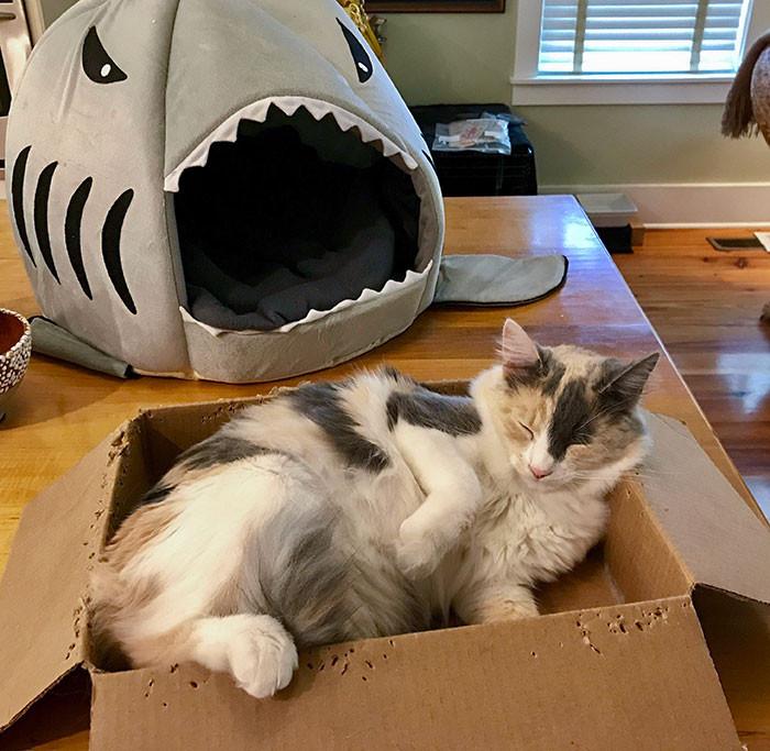 Любимые места котиков это не домики, лежаки или кроватки Животные