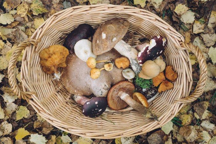 Из-за чего народы Севера не употребляют в пищу грибы