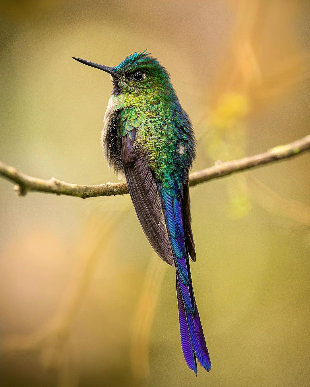 Красота птиц на снимках Шона Грассера Животные