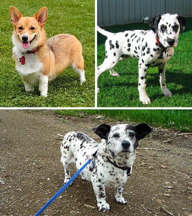 Нечистокровные собаки, которые выглядят очень привлекательно