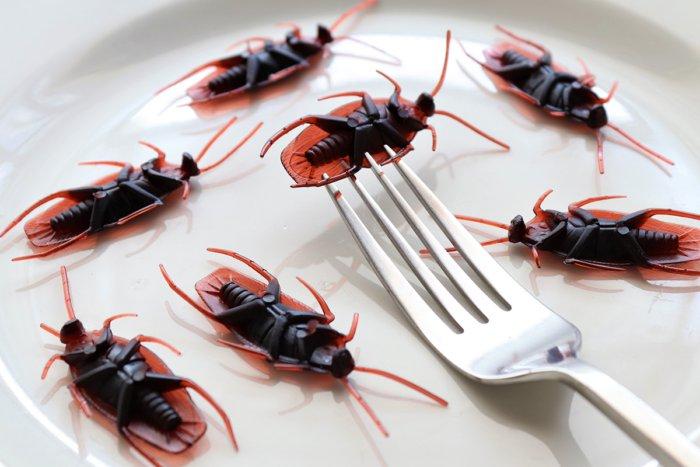 Сколько молока могут давать тараканы