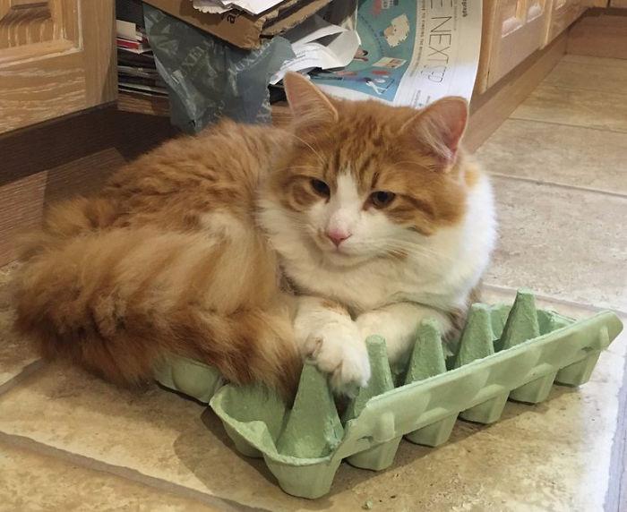 Котики и их сильная любовь к картонным коробкам