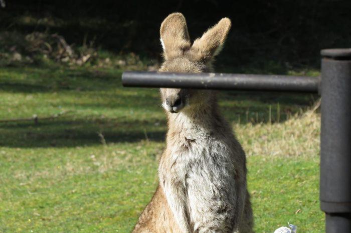 Неудачные снимки животных, которые не так уж и плохи