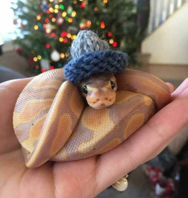 Интернет-сообщество людей, которым нравится делать шляпки для змей
