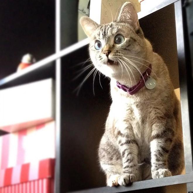 Домашние животные узнали, что они приёмные Животные