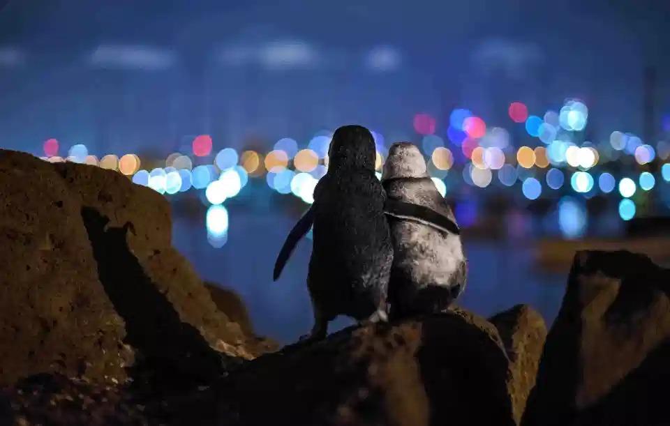 Фотографии победителей конкурса Ocean Photography Awards 2020