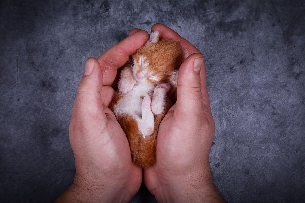 Портретные снимки котиков от Светланы Воскресенской