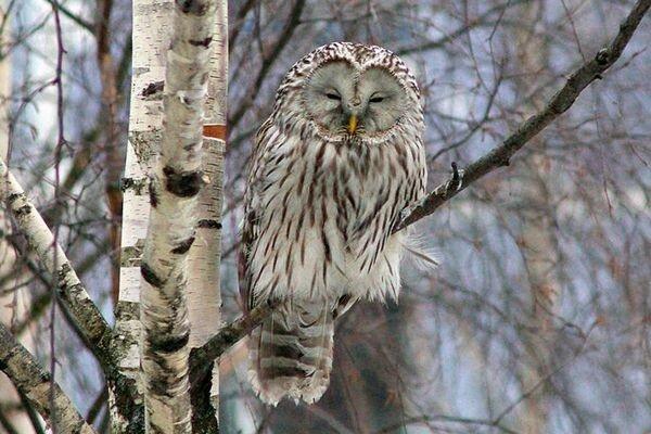 Животные, которые проживают только на территории России