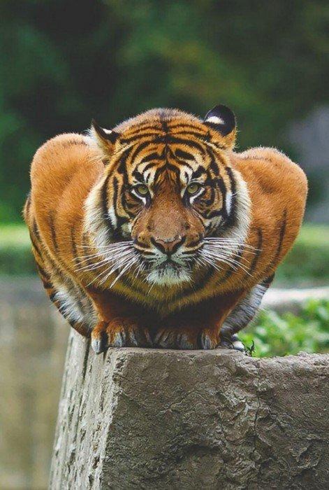 Животные на фотографиях выглядят как настоящие культуристы