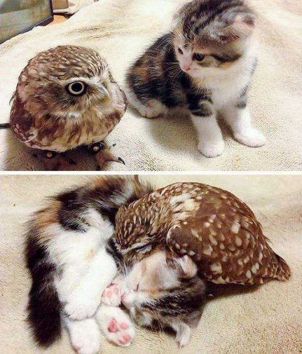 Примеры неожиданной любви и дружбы животных