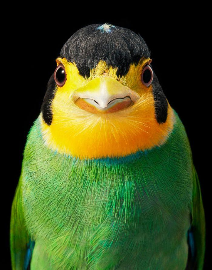 Яркие портреты птиц от фотографа Тима Флэка