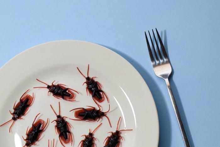 Почему тараканы могут жить без головы