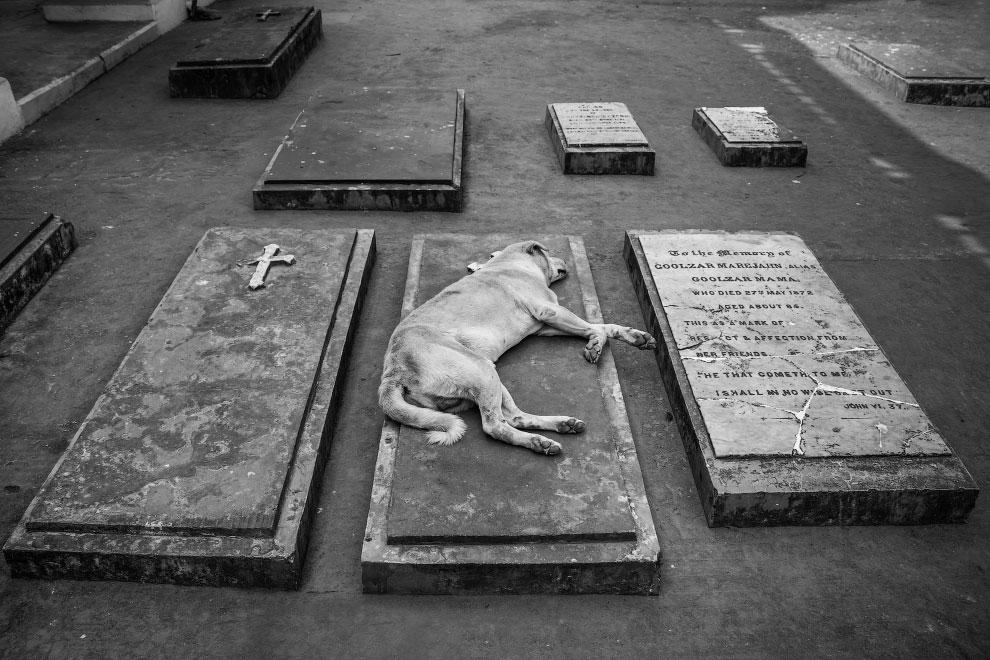 Лучшие снимки с фотоконкурса #Animals2020