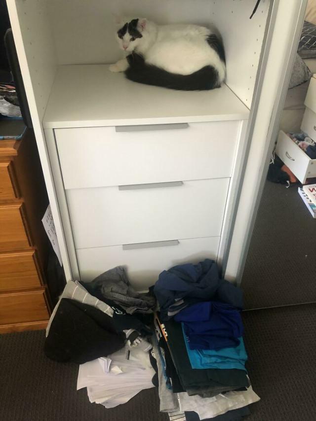 Котики — это спокойствие и уют в доме