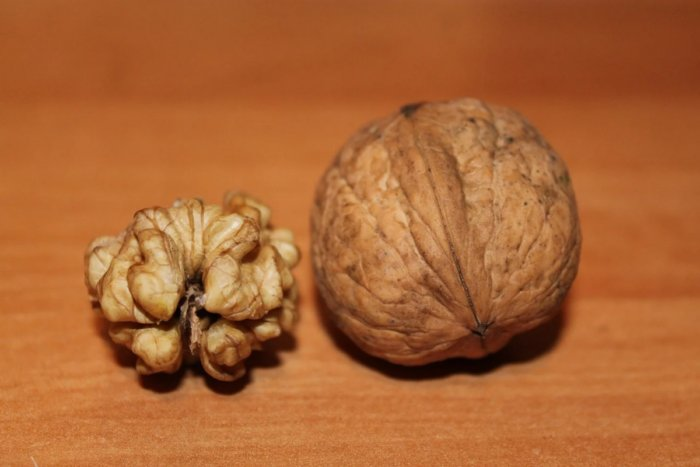 Полезные свойства орехов: их стоит включить в свой рацион