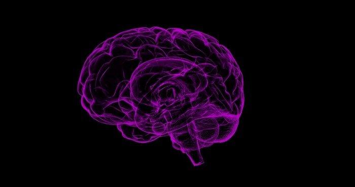 Сколько информации может сохранить наш мозг