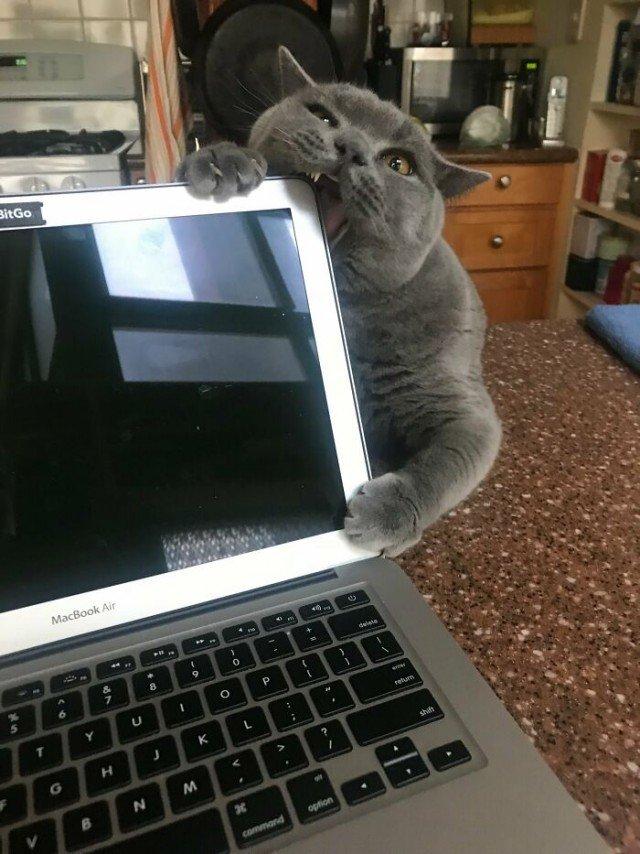 Котики-проказники, пойманные на месте преступления Животные