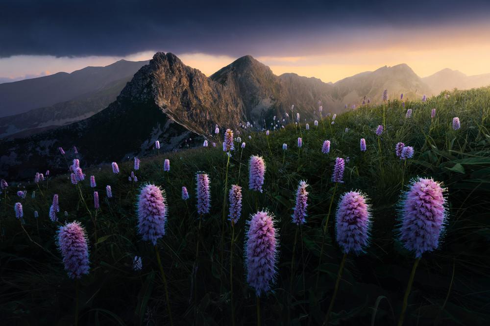 Победители фотоконкурса REDISCOVER Nature 2020
