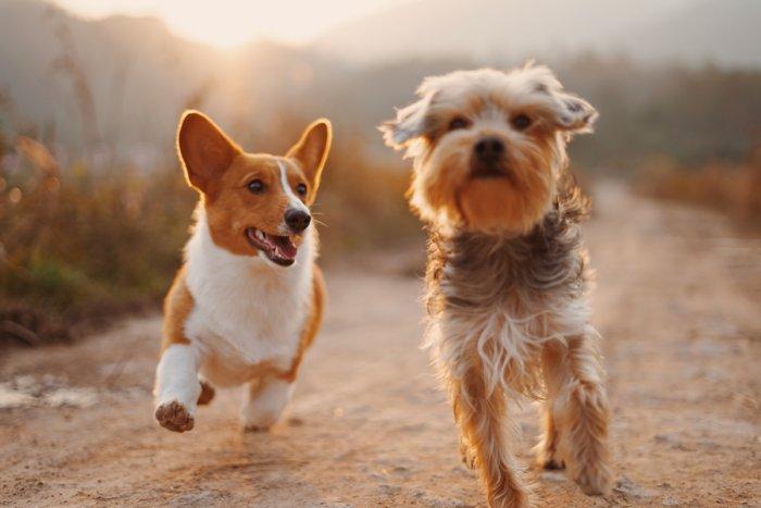Зачем собаки нюхают друг друга под хвостом?
