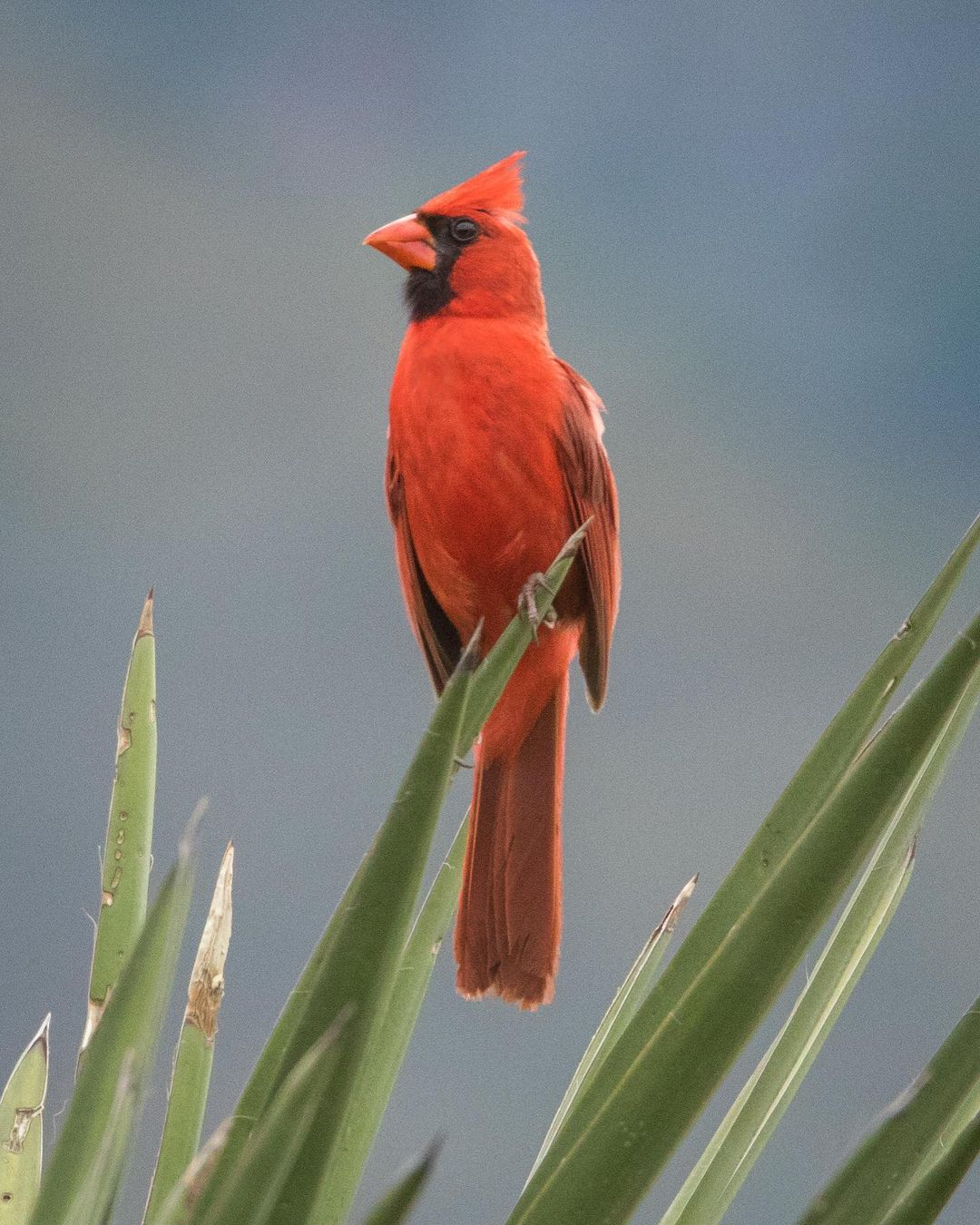 Дикие птицы от фотографа Алехандры Перез