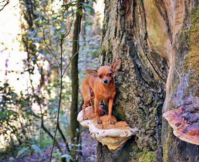 Снимки собачек на грибах