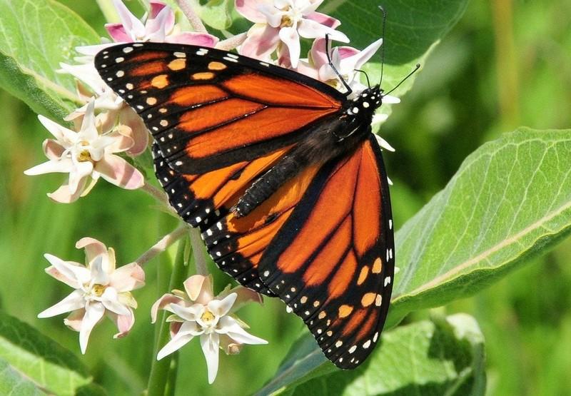 Некоторые интересные факты о бабочках