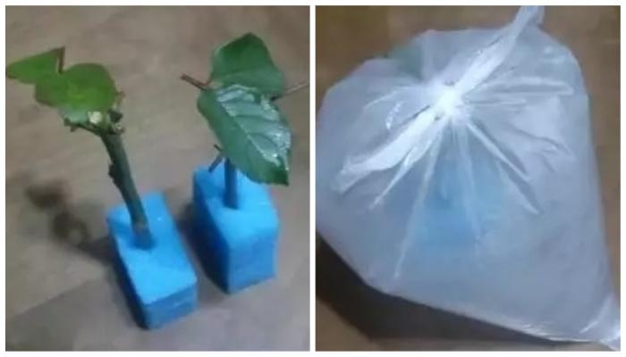 Нестандартные советы по уходу за комнатными растениями