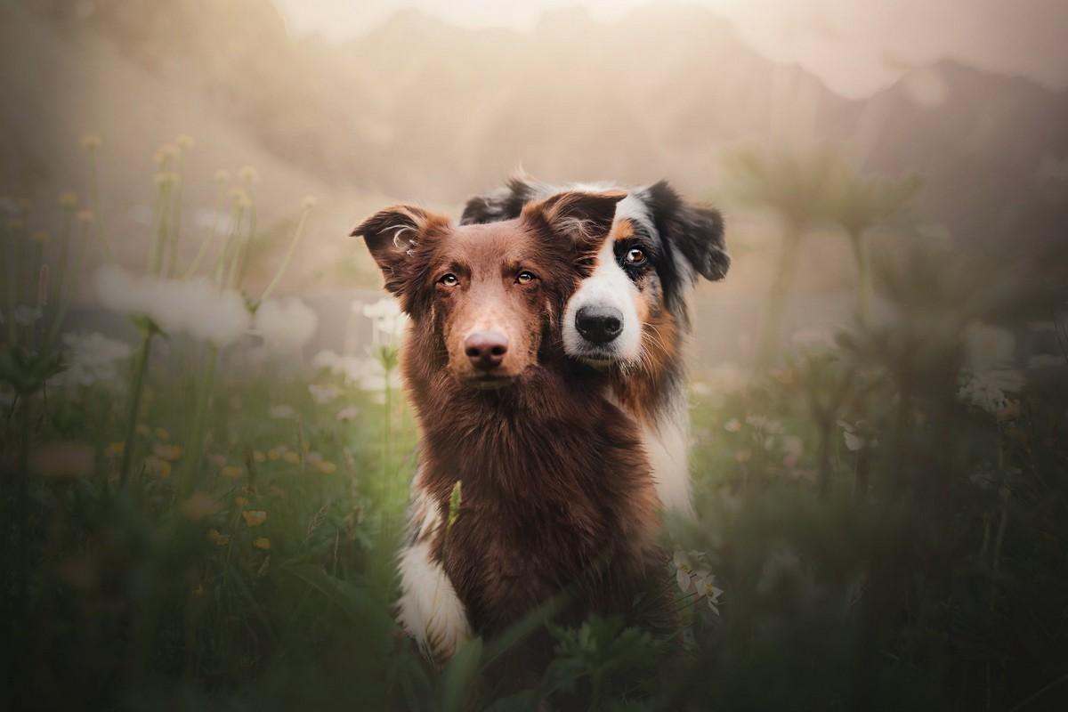 Очаровательные пёсели на фотографиях Кристины Квапиловой