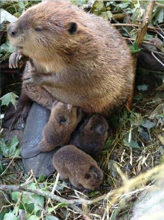 Мамы рядом с детёнышами из животного мира