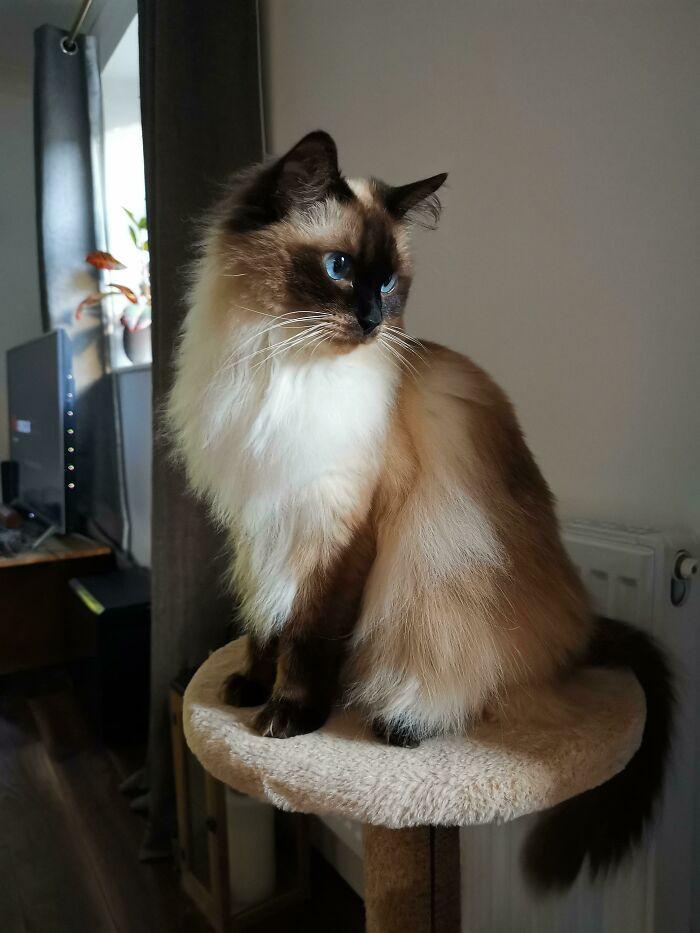 Прекрасные кошки, которые выглядят словно модели