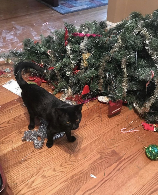 Битва котиков против новогодних ёлок