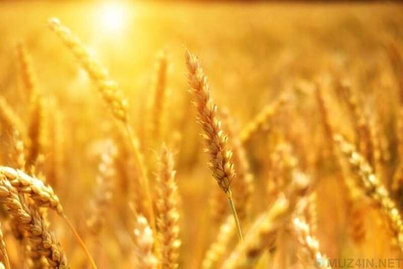 Разрушительные катастрофы, связанные с продуктами питания