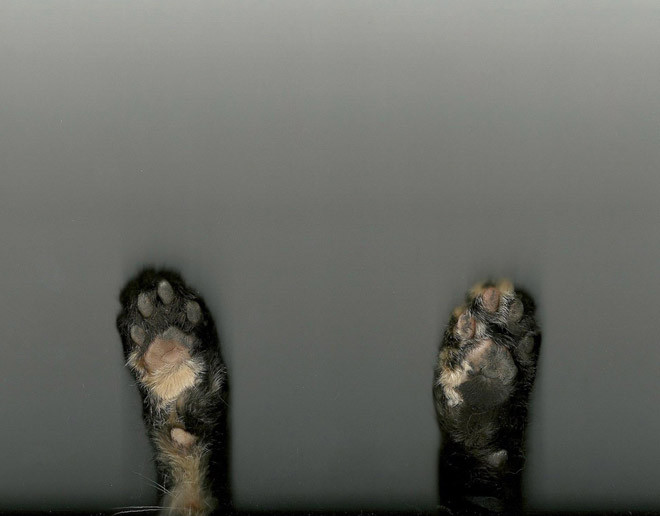 Люди сканируют своих котиков на самоизоляции