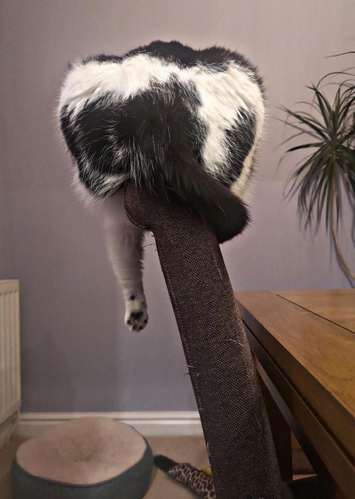 У котиков весьма своеобразное представление об уютном лежаке