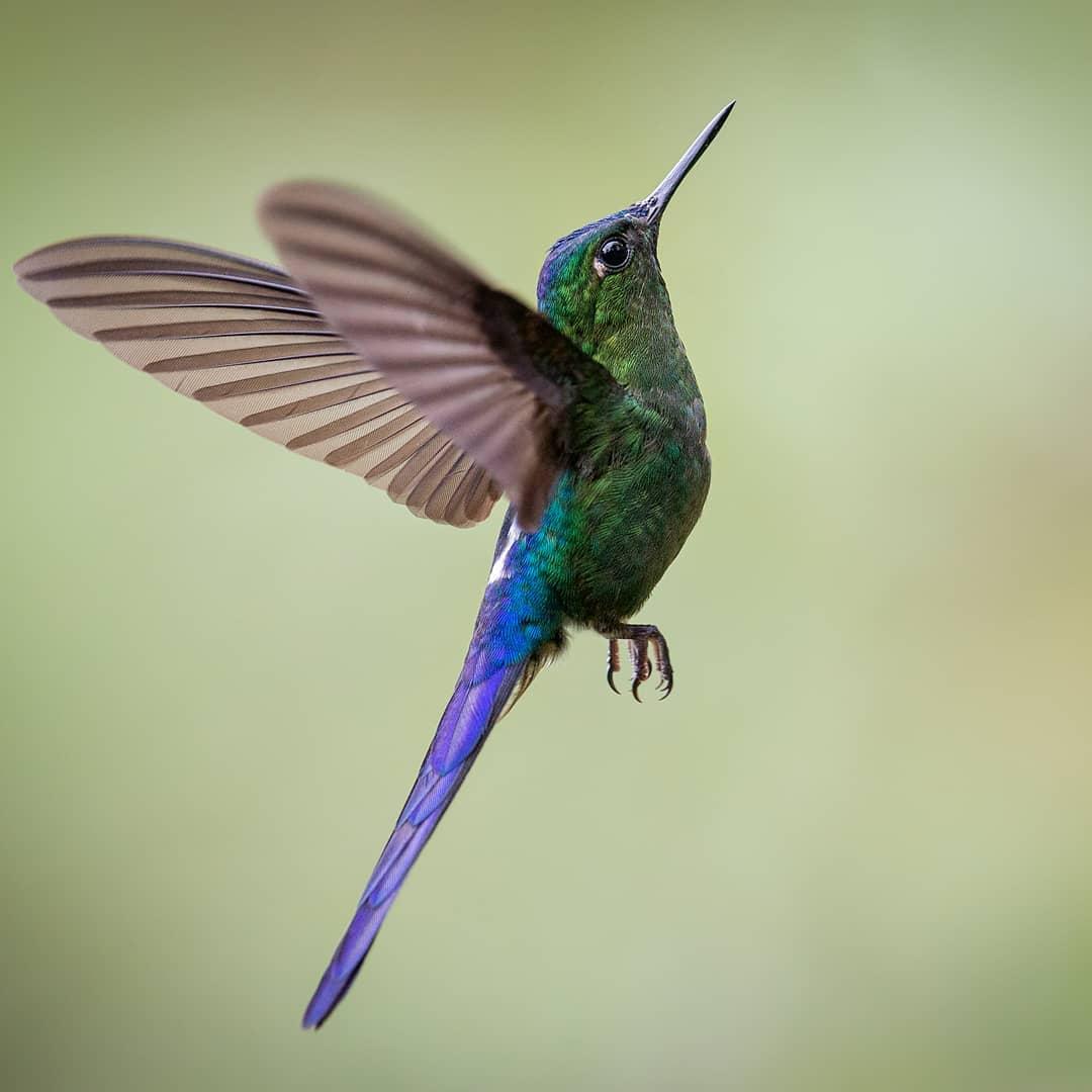 Красивые птицы на снимках Луиса Фернандо Агудело