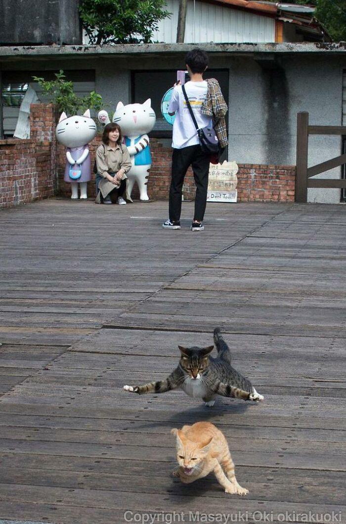 Уличные котики Токио на снимках Масаюки Оки