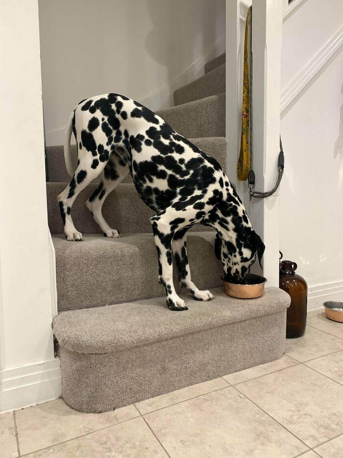 Этим собакам кажется нужна перезагрузка